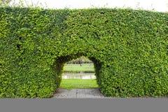 Parete delle piante verdi del giardino con la porta; progettazione all'aperto di architettura Fotografia Stock
