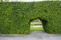 Parete delle piante verdi del giardino con la porta; progettazione all'aperto di architettura Fotografia Stock Libera da Diritti