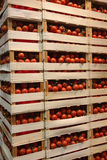 Parete delle scatole con i pomodori Fotografie Stock