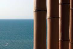 Parete di bambù Immagini Stock