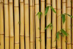 Parete di bambù con il fondo delle foglie Immagini Stock