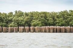 Parete di bambù e la mangrovia Immagine Stock