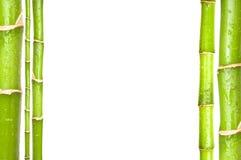 Parete di bambù verde della pianta come fondo fotografia stock