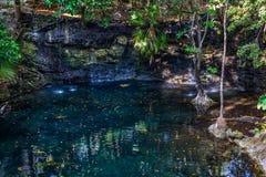 Parete di Cenote fotografia stock libera da diritti