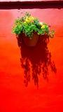 Parete di colore rosso e fiore della pianta fotografia stock libera da diritti