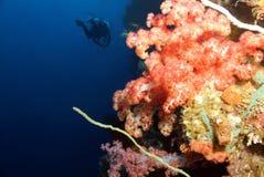 Parete di corallo Fotografia Stock