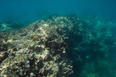 Parete di corallo nel Messico Immagine Stock