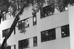 Parete di edificio residenziale vicino all'albero immagini stock libere da diritti