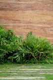 Parete di età della pietra con il fondo tropicale degli alberi immagine stock libera da diritti