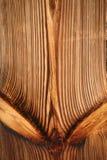 Parete di legname dell'albero di pino Immagini Stock Libere da Diritti