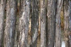 Parete di legno fotografia stock