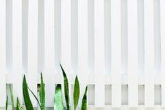 Parete di legno bianca con il foglio verde Fotografia Stock