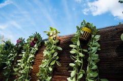 Parete di legno con le foglie verdi in mini vaso variopinto su cielo blu b Immagine Stock Libera da Diritti