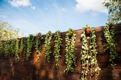 Parete di legno con le foglie verdi in mini vaso variopinto su cielo blu b Immagine Stock