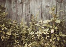 Parete di legno del granaio nella campagna Fotografia Stock