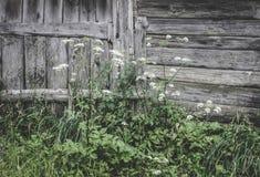 Parete di legno del granaio nella campagna Fotografie Stock Libere da Diritti