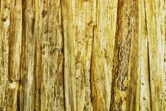 Parete di legno del pino nodoso strutturata Immagine Stock Libera da Diritti