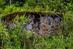 Parete di pietra di 100 anni nella foresta invasa Immagini Stock