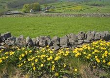 Parete di pietra asciutta del campo del terreno coltivabile Immagine Stock