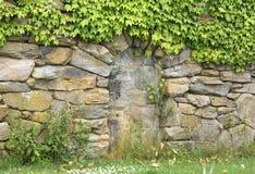 Parete di pietra con l'edera Immagini Stock