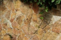 Parete di pietra con la pianta del rampicante nell'angolo in alto a destra immagine stock libera da diritti