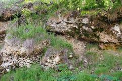 Parete di pietra con pianta Struttura della natura Fondo per testo, insegna, etichetta Fotografie Stock Libere da Diritti