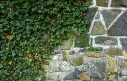 Parete di pietra coperta dalle foglie Fotografie Stock