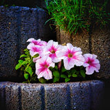 Parete di pietra del Flowerbed fotografia stock libera da diritti