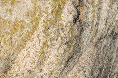Parete di pietra del fondo con struttura crustose del lichene Fotografie Stock