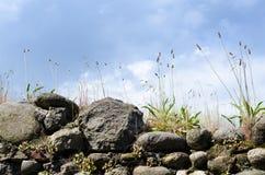 Parete di pietra e cielo ed erbe antichi immagine stock
