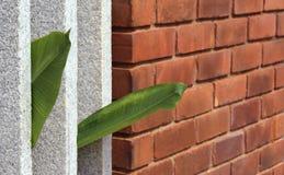 Parete di pietra e foglie Fotografia Stock
