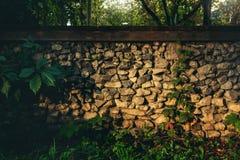 Parete di pietra ed edera selvatica immagini stock