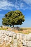 parete di pietra frondosa asciutta degli alberi Fotografie Stock