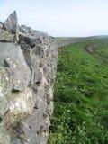 Parete di pietra, la lucertola, Cornovaglia Regno Unito Immagini Stock Libere da Diritti