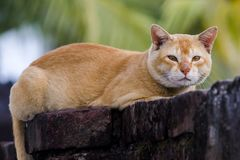 parete di seduta del gatto immagini stock