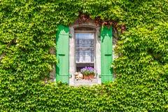Parete di una casa con la finestra coperta di edera Fotografia Stock