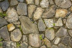 Parete di varie grandi pietre naturali con piccola vegetazione verde Parete con muschio struttura approssimativa della superficie immagini stock libere da diritti