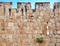 Parete di vecchia città di Gerusalemme Fotografie Stock