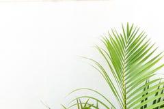 Parete e pianta bianche Fotografie Stock