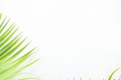 Parete e pianta bianche Immagini Stock Libere da Diritti