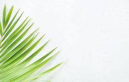 Parete e pianta bianche Fotografie Stock Libere da Diritti