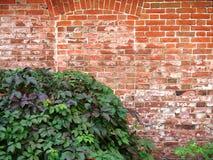 Parete e vegetazione Fotografia Stock Libera da Diritti