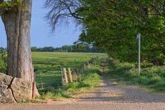 Parete ed albero rotti sentiero per pedoni del paese Fotografia Stock