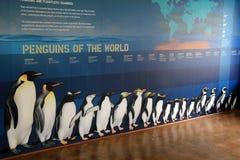 Parete educativa che mostra i pinguini del mondo, zoo di Baltimora, Maryland, marzo 2015 Fotografia Stock Libera da Diritti