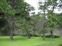 Parete forte delle rocce dietro gli alberi e l'erba Immagini Stock
