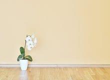 Parete gialla vuota e stanza di legno del pavimento Immagini Stock