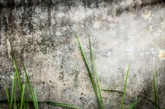 Vecchia parete di pietra scura di costruzione con l'erba verde. Fotografia Stock Libera da Diritti