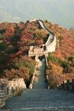 Parete nei colori di autunno Fotografia Stock