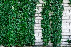 Parete ornamentale 11 Immagini Stock