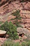 Parete rossa della scogliera della roccia Immagini Stock Libere da Diritti